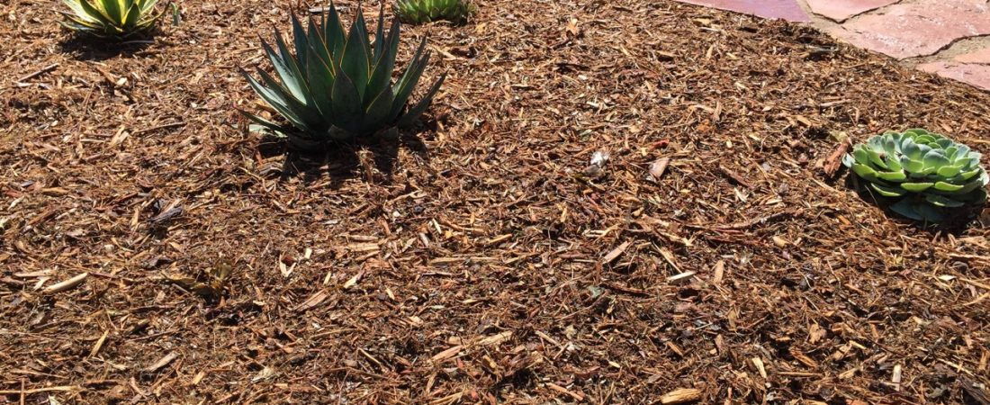 drought-resistant plants and bark